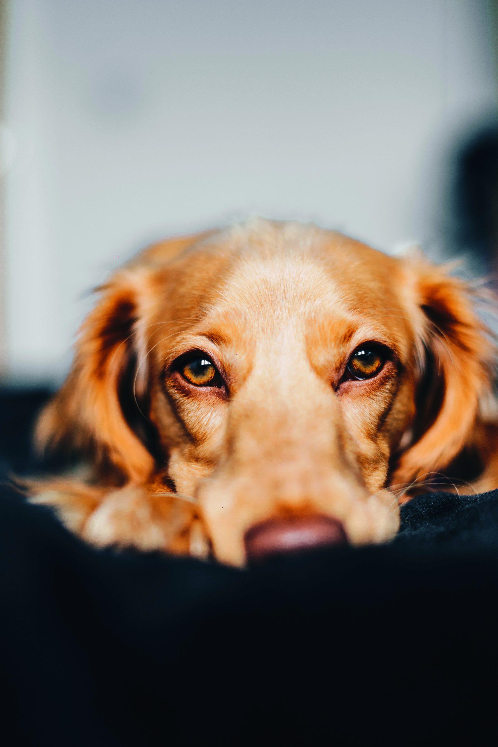Pets Corner: life in lockdown