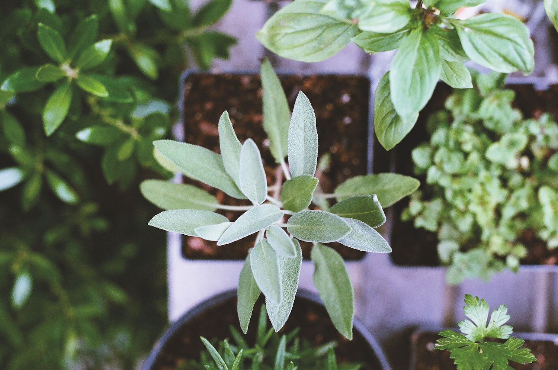 Grow your own fresh herbs