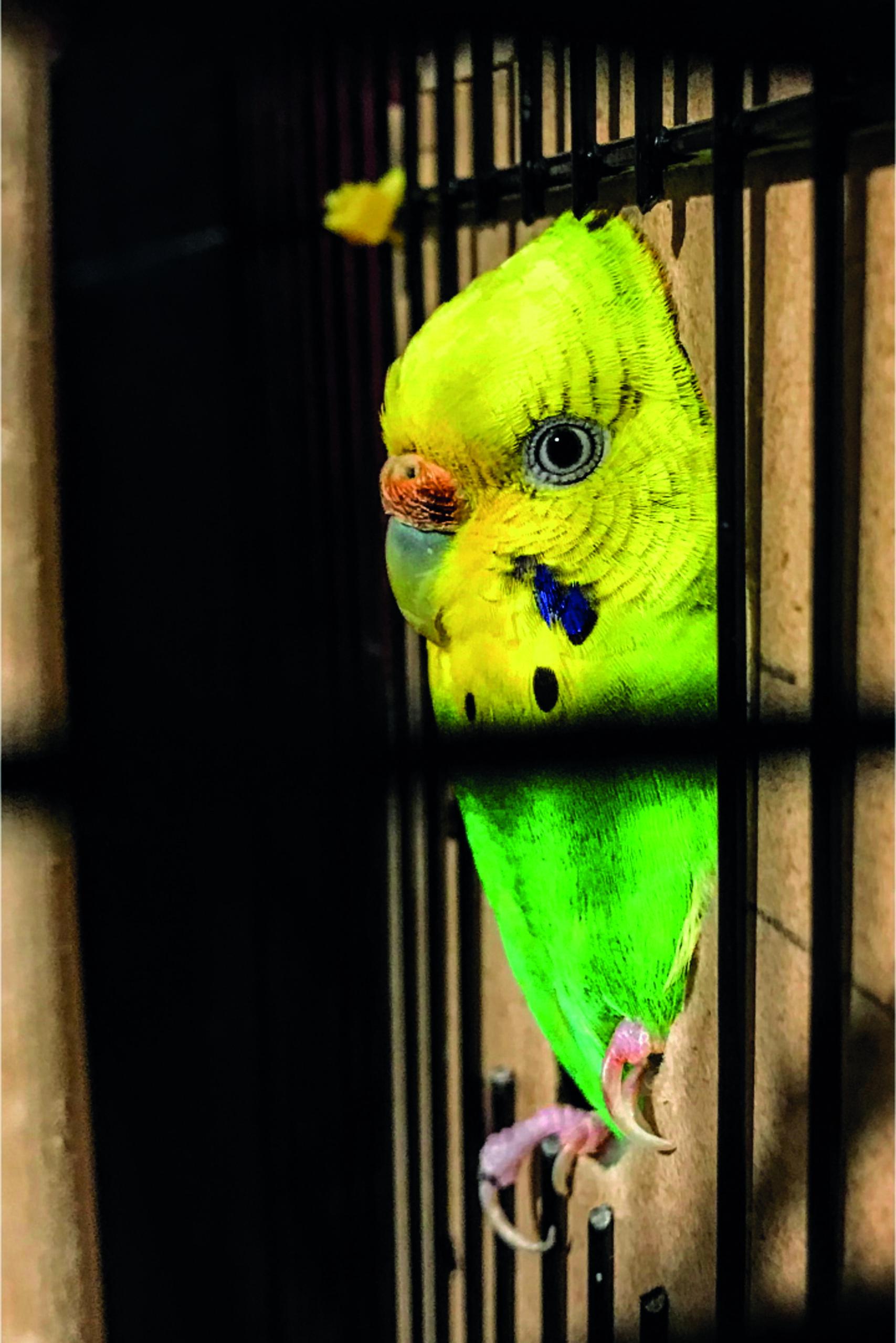 Pets Corner: Escaped Birds