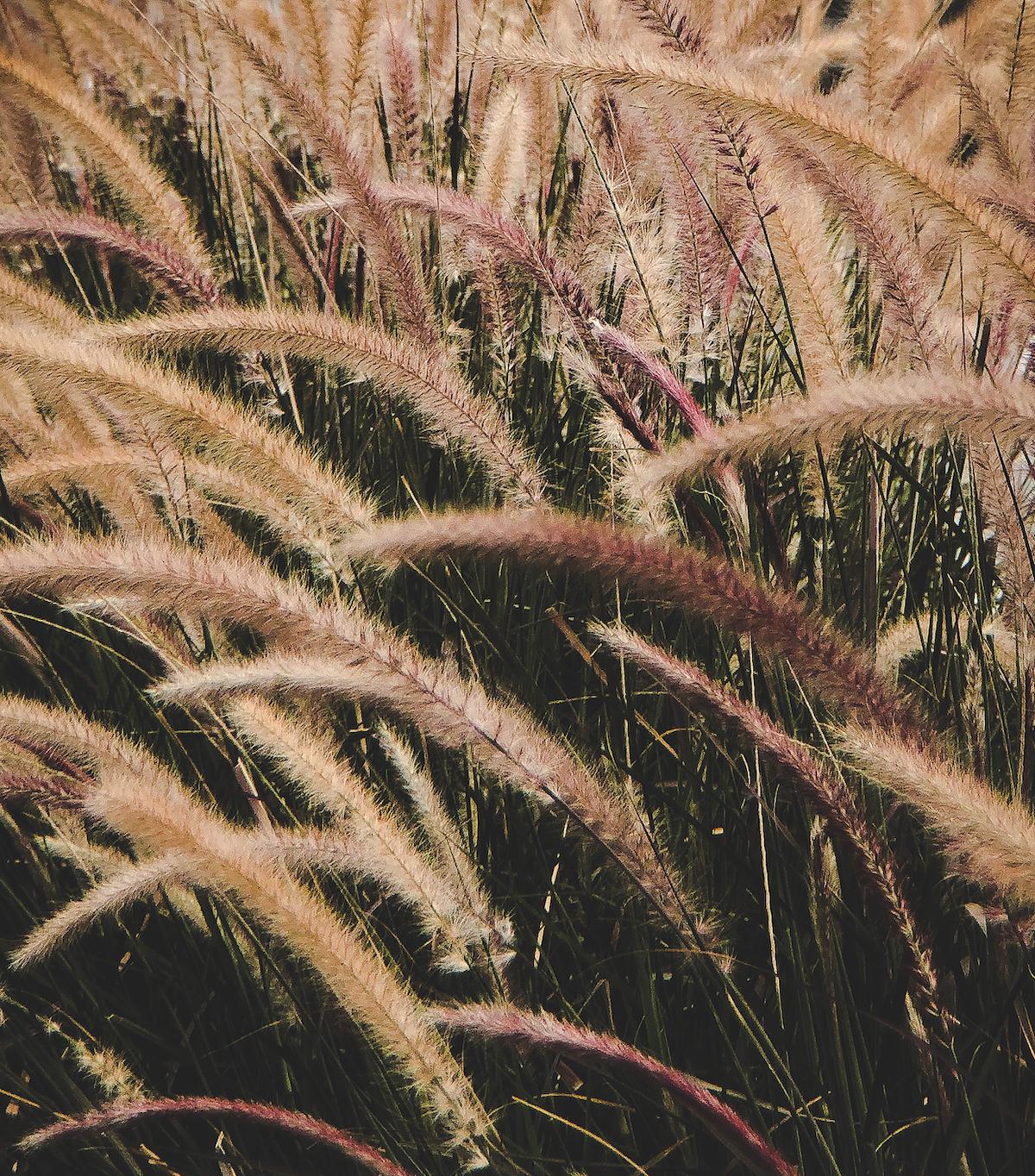 The Joys of Ornamental Grasses