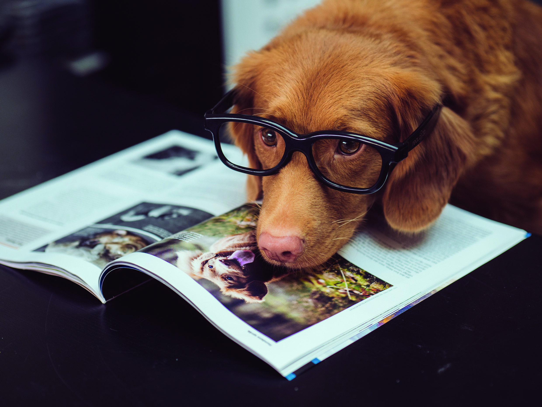 Link Age Southwark Online Pet Contest