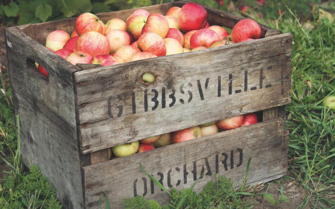 Garden Talk – Grow your own apples