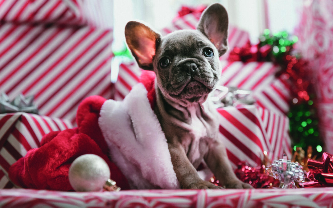 Twelve days of Christmas memo for lockdown puppy owners