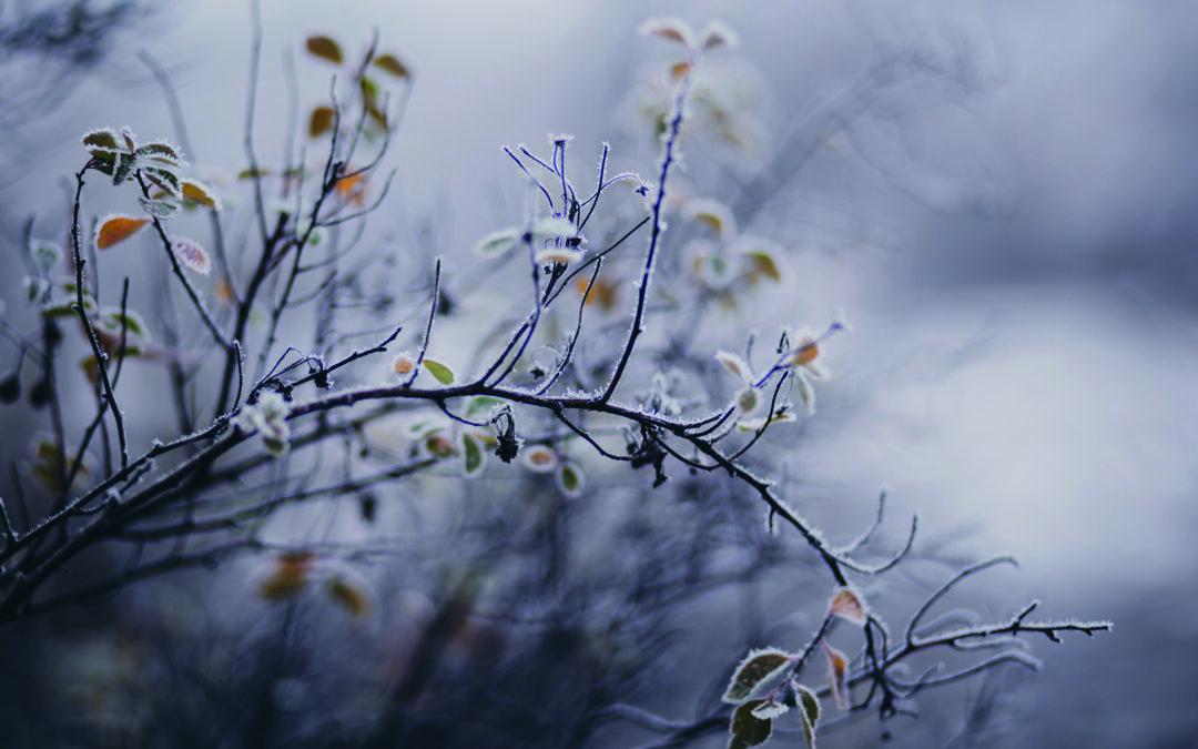 Garden Talk – A winter wonder