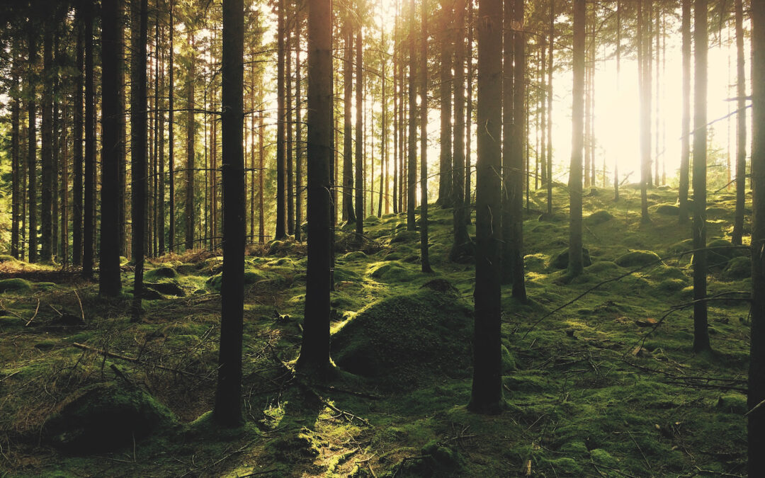 Forest Bathing and it's Benefits