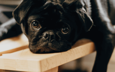 Pets Corner: The impact of stress on behaviour