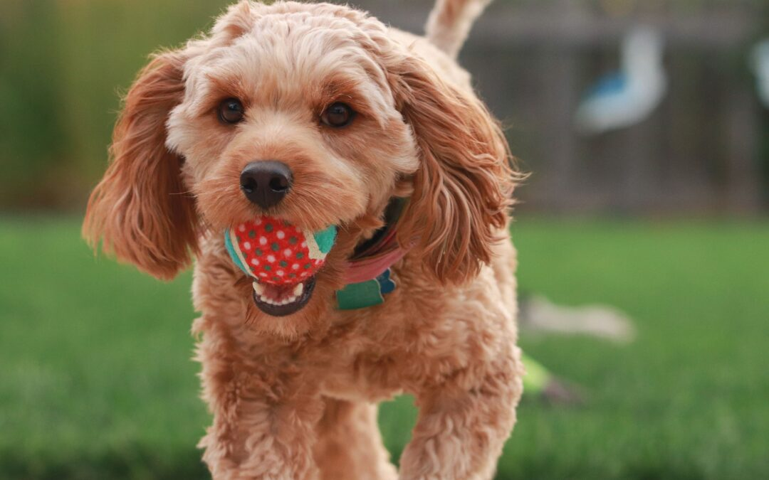 Pets Corner | Does your dog have an 'off switch'?