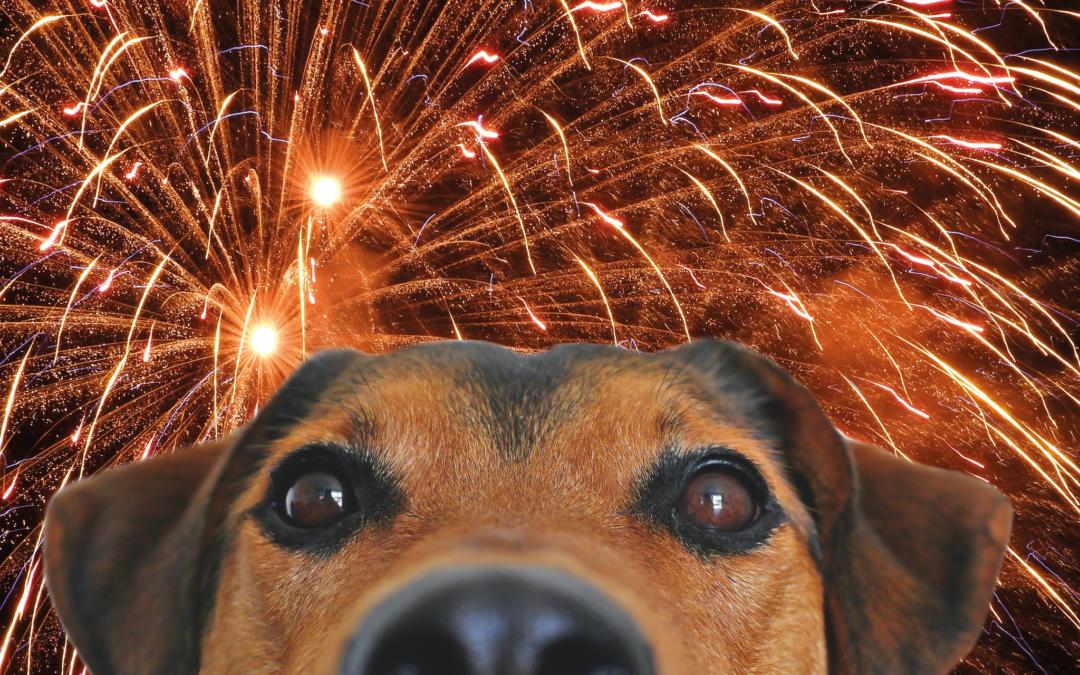 Pets Corner| Halloween and fireworks