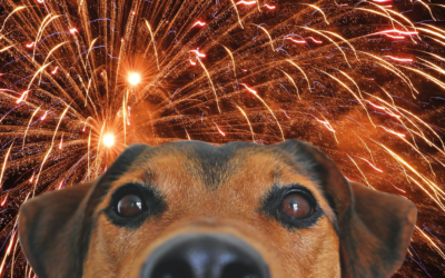 Pets Corner  Halloween and fireworks